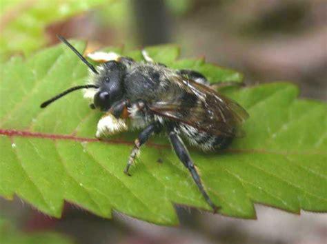 brüstungsgeländer artenschutz insekten 220 bersicht