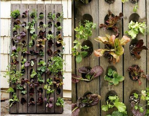 Edible Vertical Garden Amazing Vertical Salad Garden Ideas An Edible Wall Of