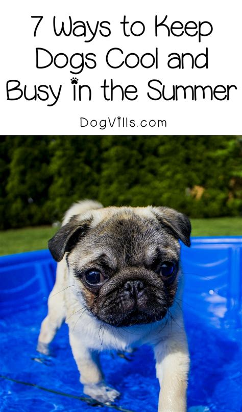 how to keep a puppy busy 7 ways to keep dogs cool and busy in the summer dogvills