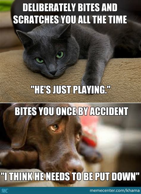 Dog And Cat Memes - cats and dogs by khama meme center