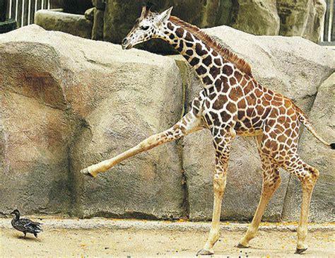 fotos animales zoo barcelona el blog de viajes del mundo viajitis con amigos el