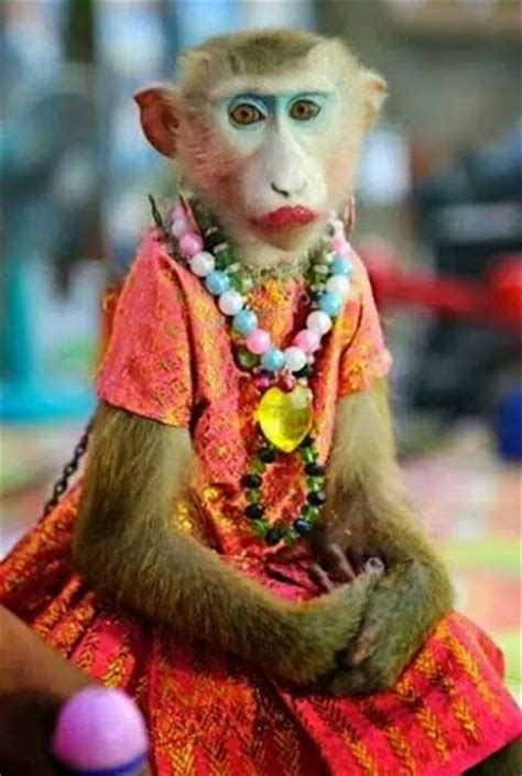 dressed monkey funny pictures  india funny pictures funny morning  quotes
