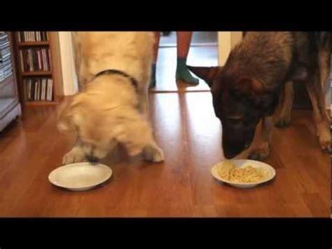 furminator reviews golden retriever hund fickt oma doovi