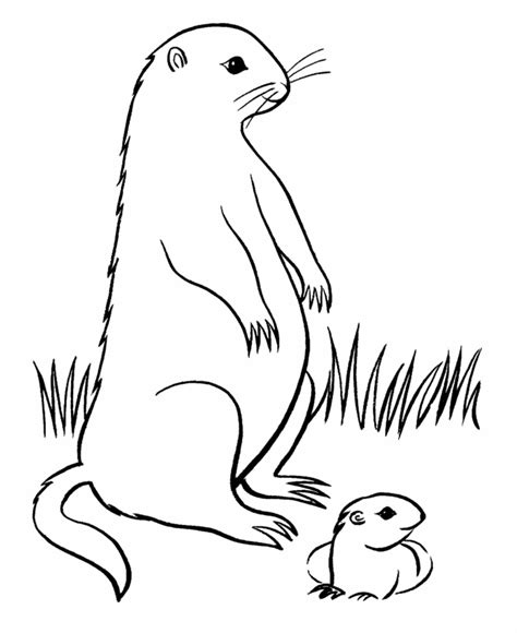 free coloring pages of groundhog color by number