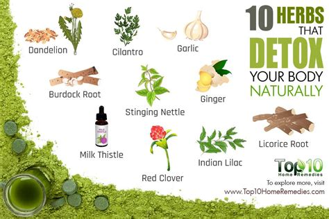 Herbs To Detox 10 herbs that detox your naturally top 10 home remedies