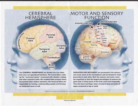 brain functions diagram brain image brain functions diagram