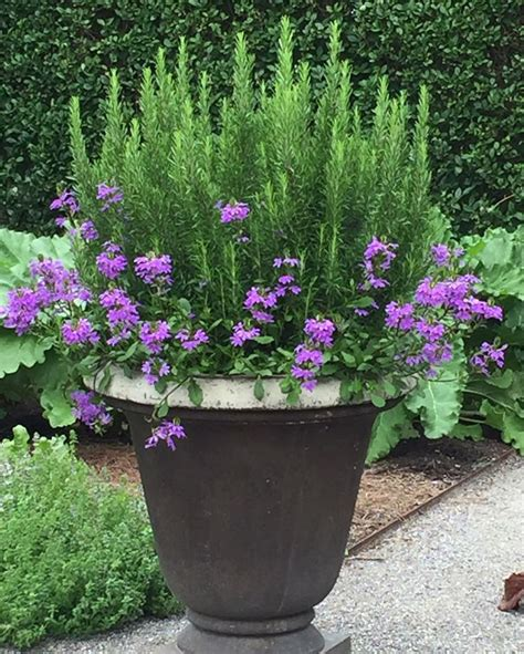 Pot Gardening Ideas Planters Amazing Container Flower Gardening Large Flower Container Gardening Pictures Flower