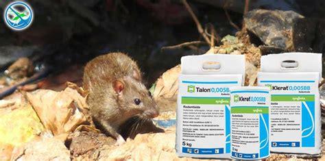 membuat perangkap tikus rumahan blog page 2 jual pestisida insektisida kimia organik