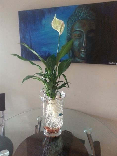 Aquatic Garden Vase by Use A Vase Rocks And A Peace Cleaned Of All Soil As