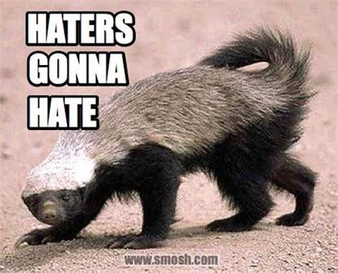 Badger Memes - best 25 honey badger humor ideas on pinterest honey