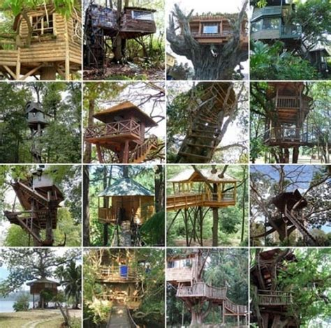 crazy tree houses crazy tree houses photography i love pinterest
