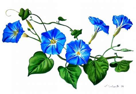 fiori disegnati e colorati disegnare fiore