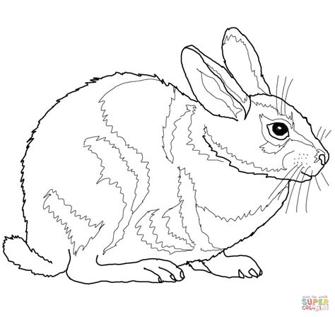 cottontail rabbit coloring page eastern cottontail rabbit coloring page free printable