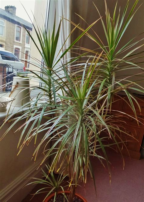 in door plants pot three four plants argements video easy tropical houseplants hgtv