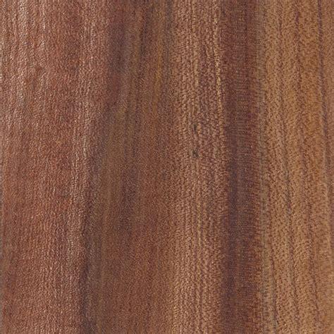 wych elm the wood database lumber identification