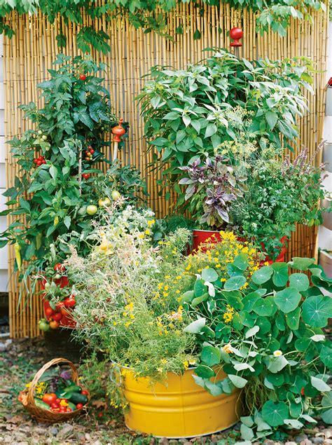 start  beginner vegetable garden  scratch