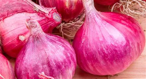 eating red onions   combat cancer thehealthsitecom