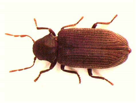 Common House Bugs by Pictures Of Common House Bugs Picture Image By