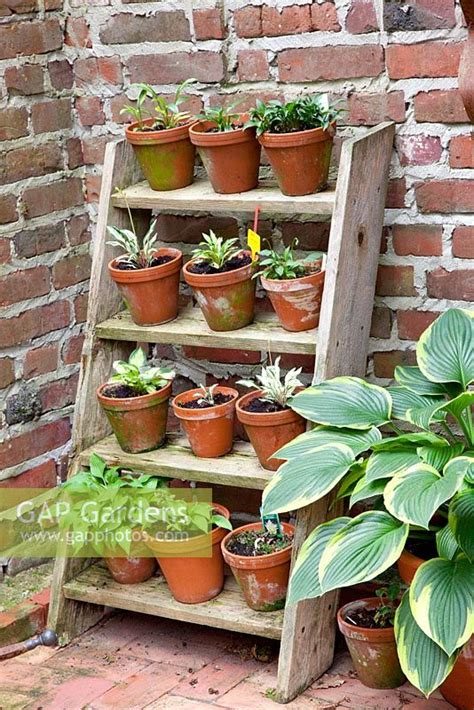 step ladder plant st stock photo  elke borkowski