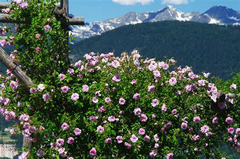 giardini italiani grandi giardini italiani la festa dei 20 anni e 8 new