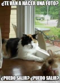 imágenes chistosas jajaja jajaja chistes de gatos graciosos humor pinterest