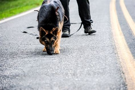 how to tracking dogs k9 and tracking and trailing sales and trainingtracking dogs