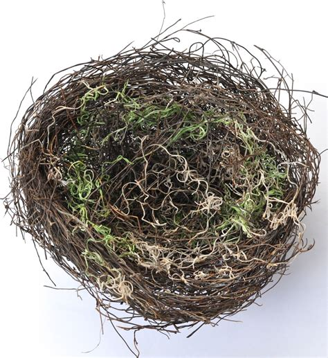 the birdmaker s nest where your treasure will be found safe and sound books diy bird nest make lovely