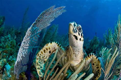 Best Diving In The Caribbean by The Best Scuba Diving Destinations In The Caribbean