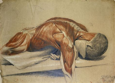 anatomy of a anatomy