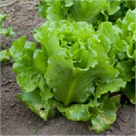 vegetables to plant in february 9 gardening tips mesa arizona planting season guide