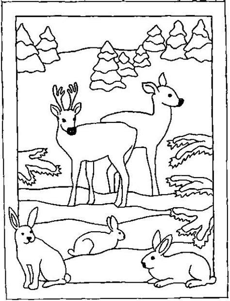 imagenes para colorear bosque dibujo de la fauna para colorear imagui