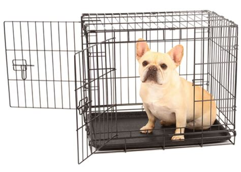I Didnt Even Er Pet Pet Pet Product 3 2 by How To Choose A Small Crate For Your Dachshund