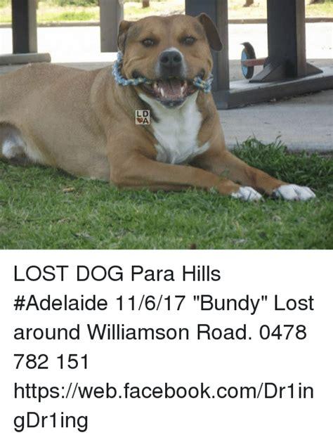 Lost Dog Meme - ld da lost dog para hills adelaide 11617 bundy lost
