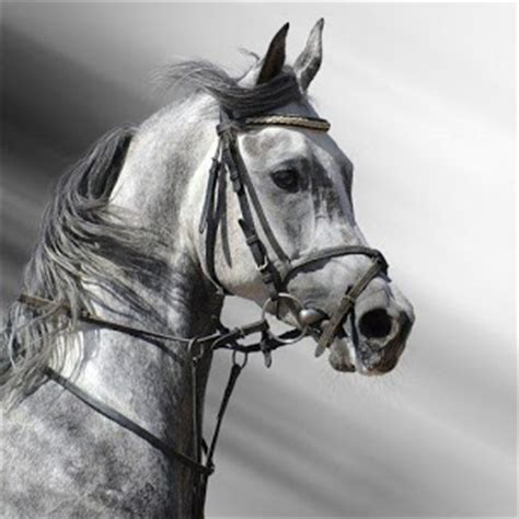white horse house music black white horse wallpaper hd android apps on google play