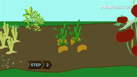 How to Rotate Vegetable Crops   YouTube