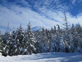 Snow Images Free Stock Photo Of Forest Snow Trees