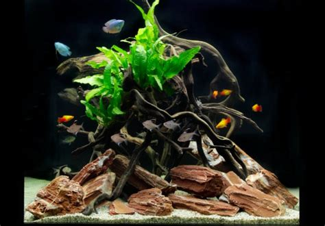 Cube Aquarium Aquascape by How To Set Up A Low Maintenance Cube Shaped Aquarium