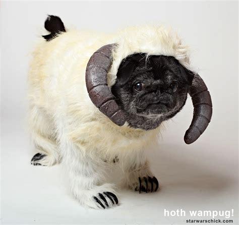 chubbs the pug chubbs the pug in costume