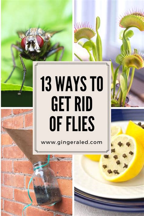 how to get rid of flies in my house 13 ways to get rid of flies gingeraled
