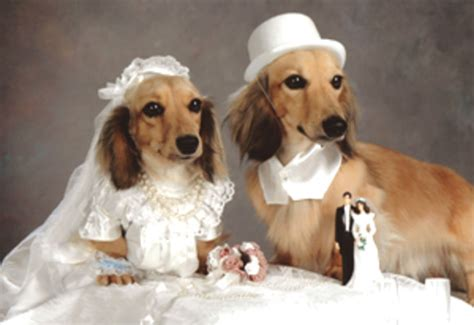 puppy wedding weddings are an adorable tradition for humans