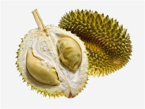 gambar buah durian gambar gambar buah