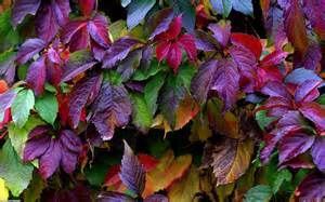 colorful leaves colorful leaves wallpaper 14334 open walls