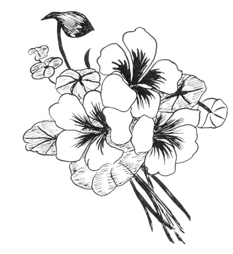Beautiful Easy To Draw Flowers by Beautiful Flower Drawings Drawing Library Practice