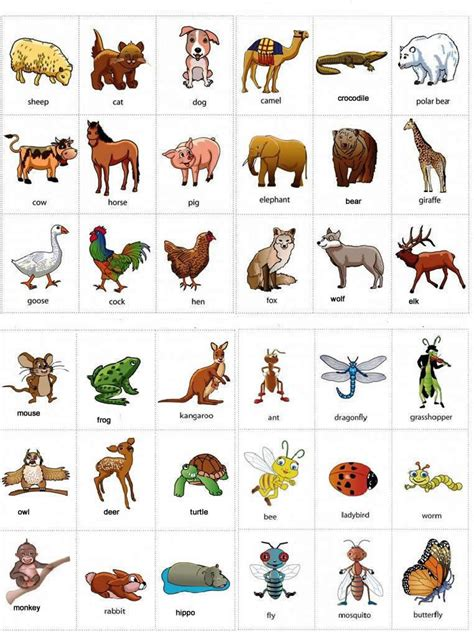 animals names with pictures learning