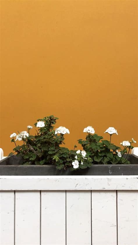 aesthetic grid plants wallpapers top  aesthetic grid