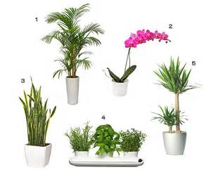 Best Inside Plants by Indoor Plants Related Keywords Amp Suggestions Indoor