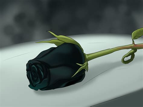 black images roses pictures collection for free