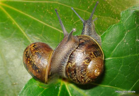 Snails In Garden by T E R R A I N Taranaki Educational Resource Research