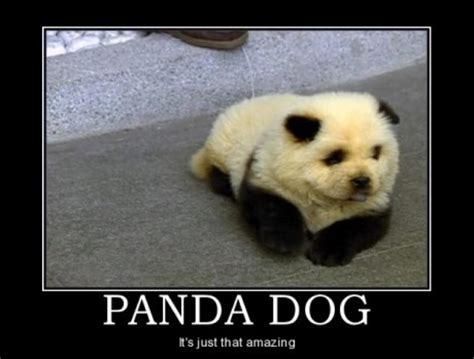Sex Panda Meme - panda cross with a dog jokes memes pictures