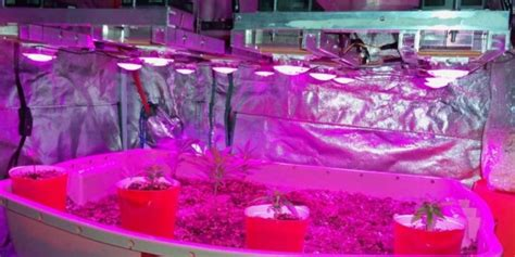 diy led grow light 10 diy led grow lights for growing plants indoors home